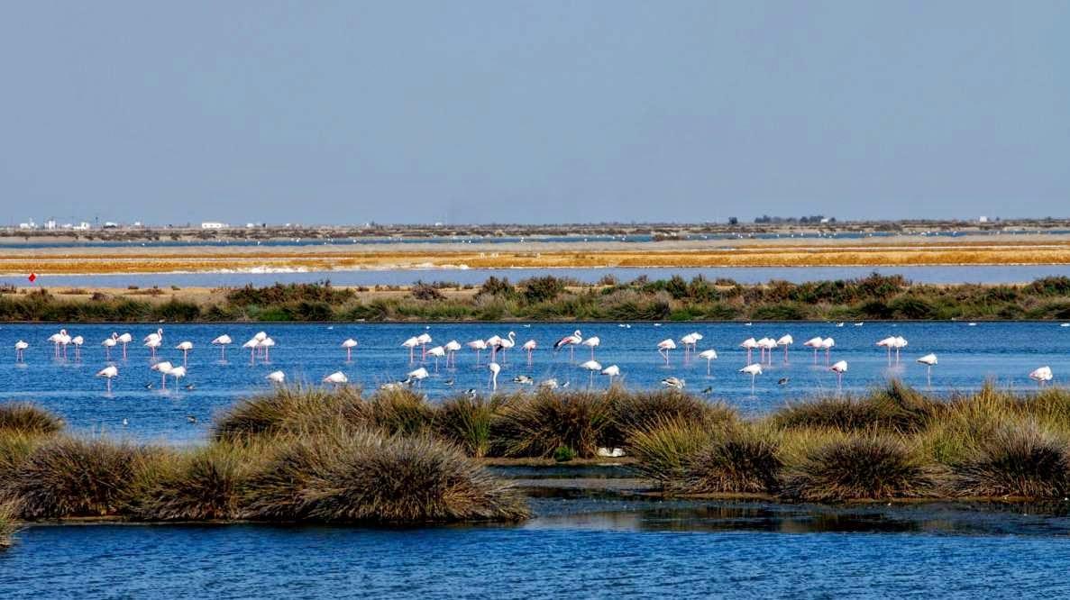 Parques Naturales - Doñana