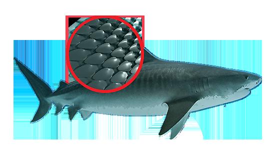 01-shark-skin
